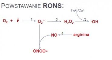 rons pows